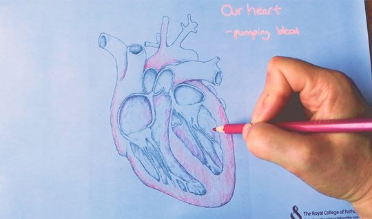Time lapse: Inside the heart art resource