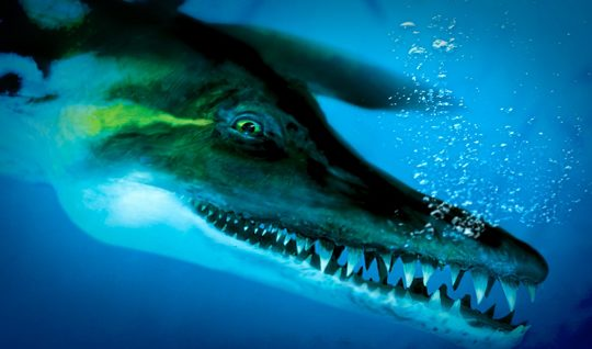 Pliosaurus! – supported by our grant scheme